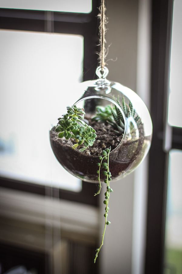 Side Project: Make Your Own Succulent Terrarium & Planter