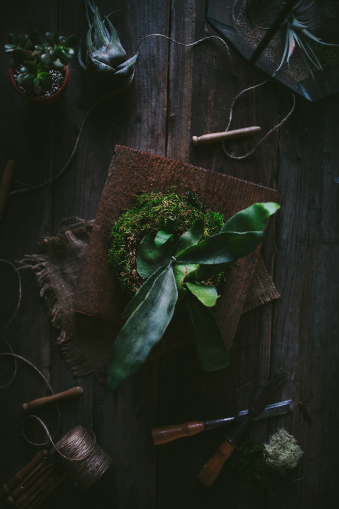 Wall Mounted Staghorn Fern by Eva Kosmas Flores | Adventures in Cooking