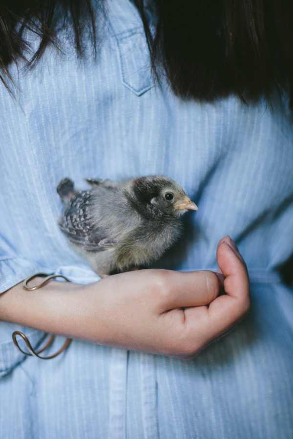 My Chickens | Lilith 1 week old | by Eva Kosmas Flores of Adventures in Cooking
