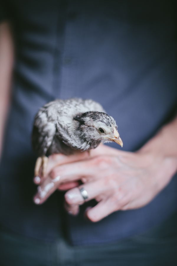 My Chickens | Lilith 1 month old | by Eva Kosmas Flores of Adventures in Cooking