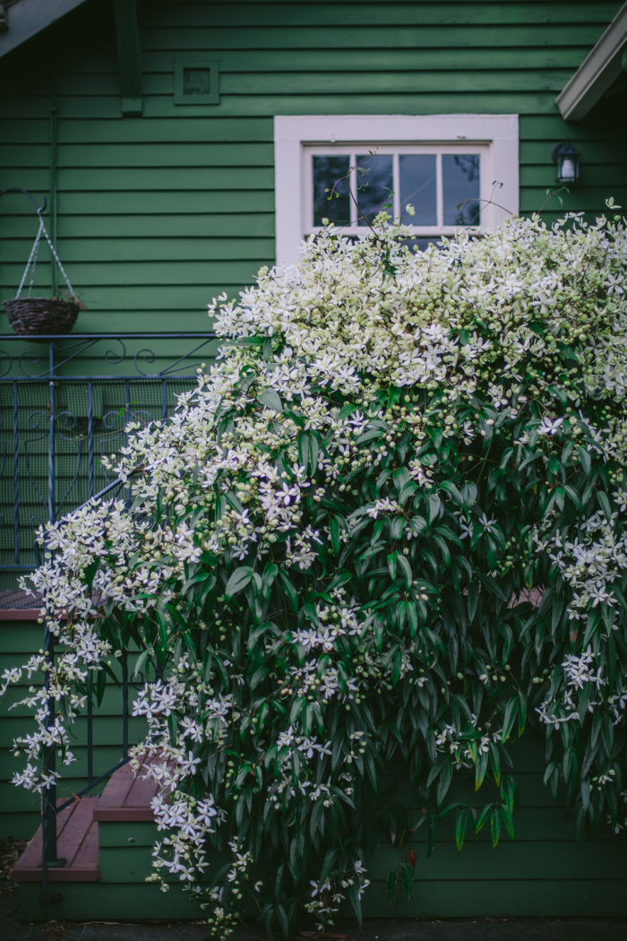 Spring Garden by Eva Kosmas Flores | Adventures in Cooking