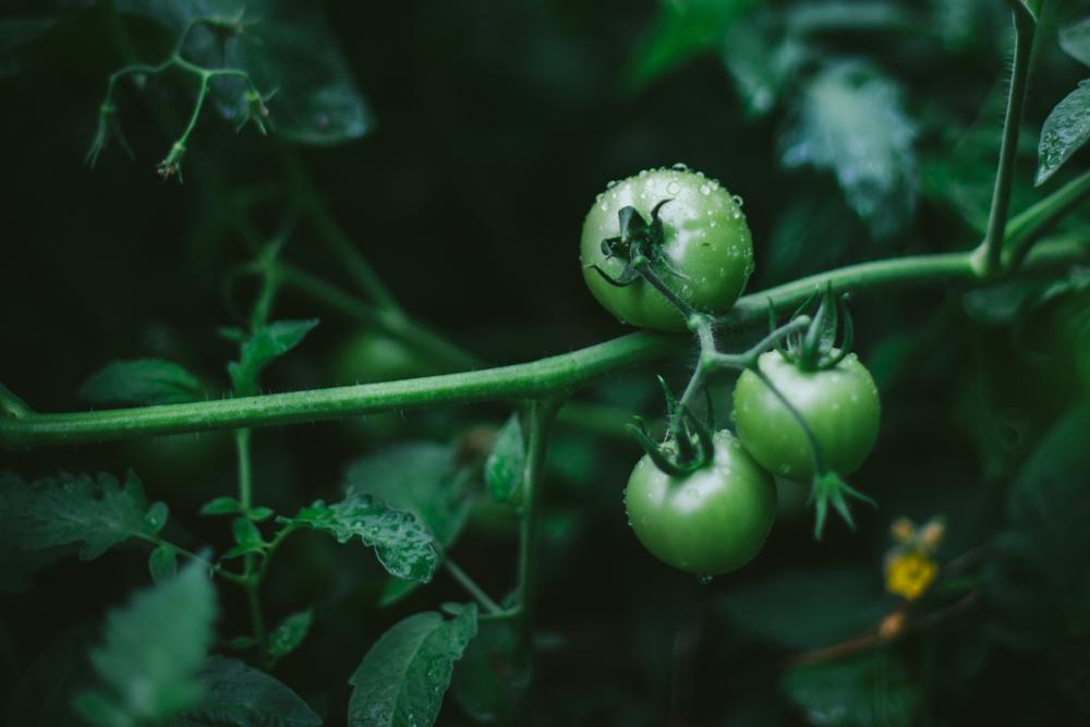 Garden About by Eva Kosmas Flores