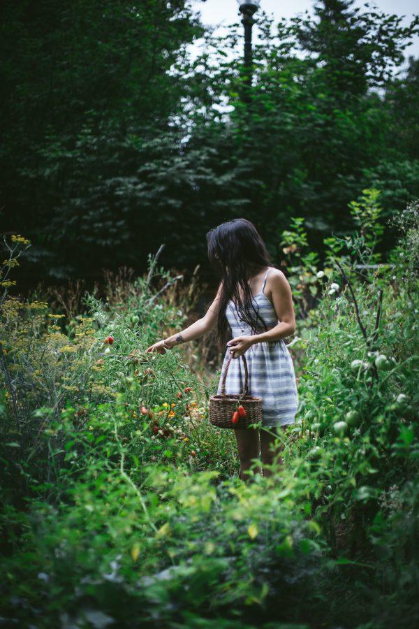 Summer Garden Honey Bees by Eva Kosmas Flores of Adventures in Cooking