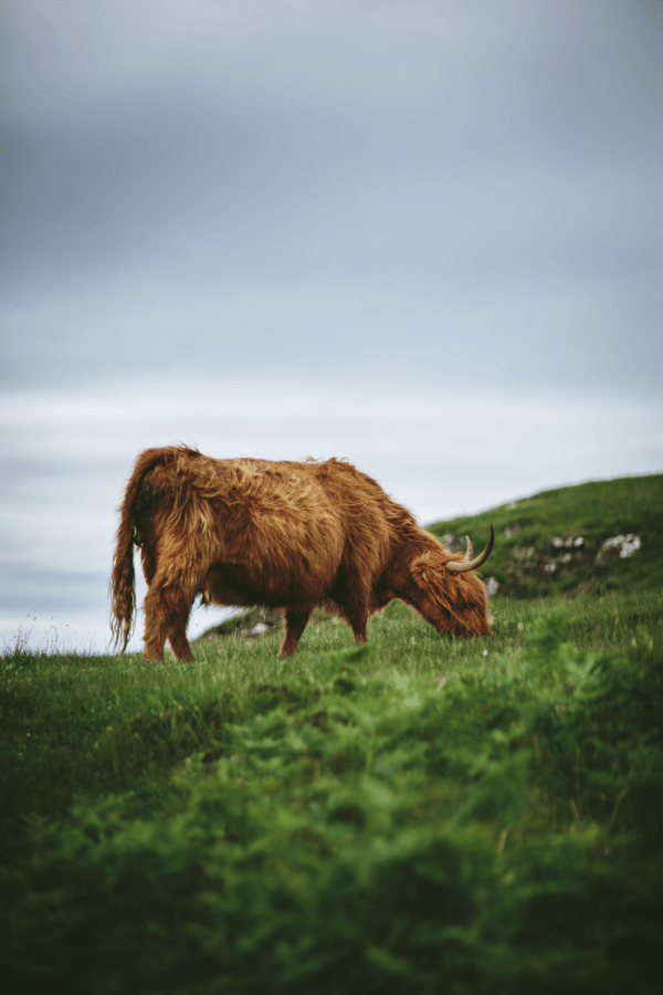 North + Overcast Travel Photography Presets
