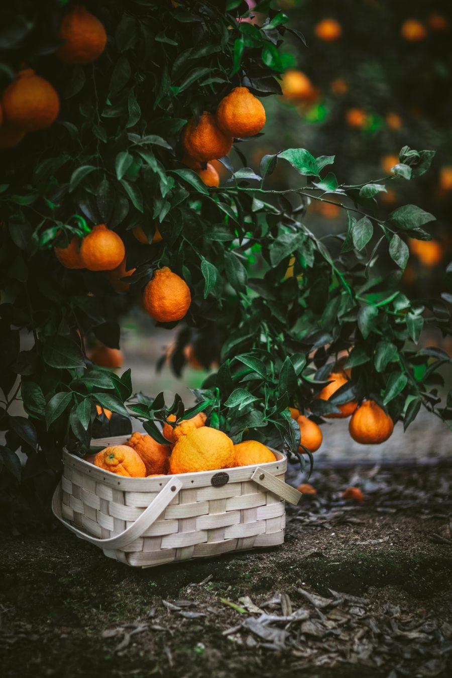 Sumo Citrus Agua Fresca