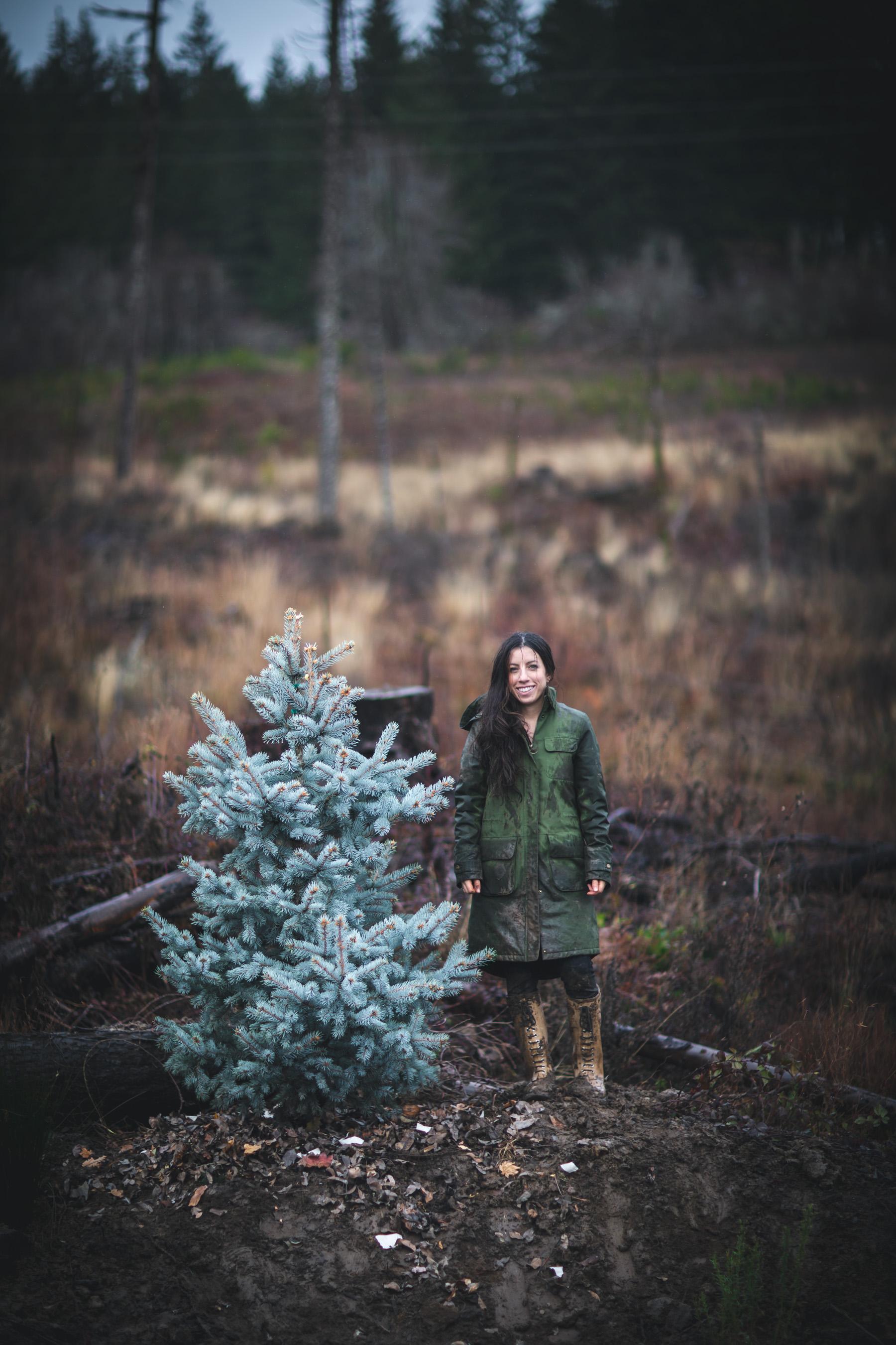 Blue Spruce Tree